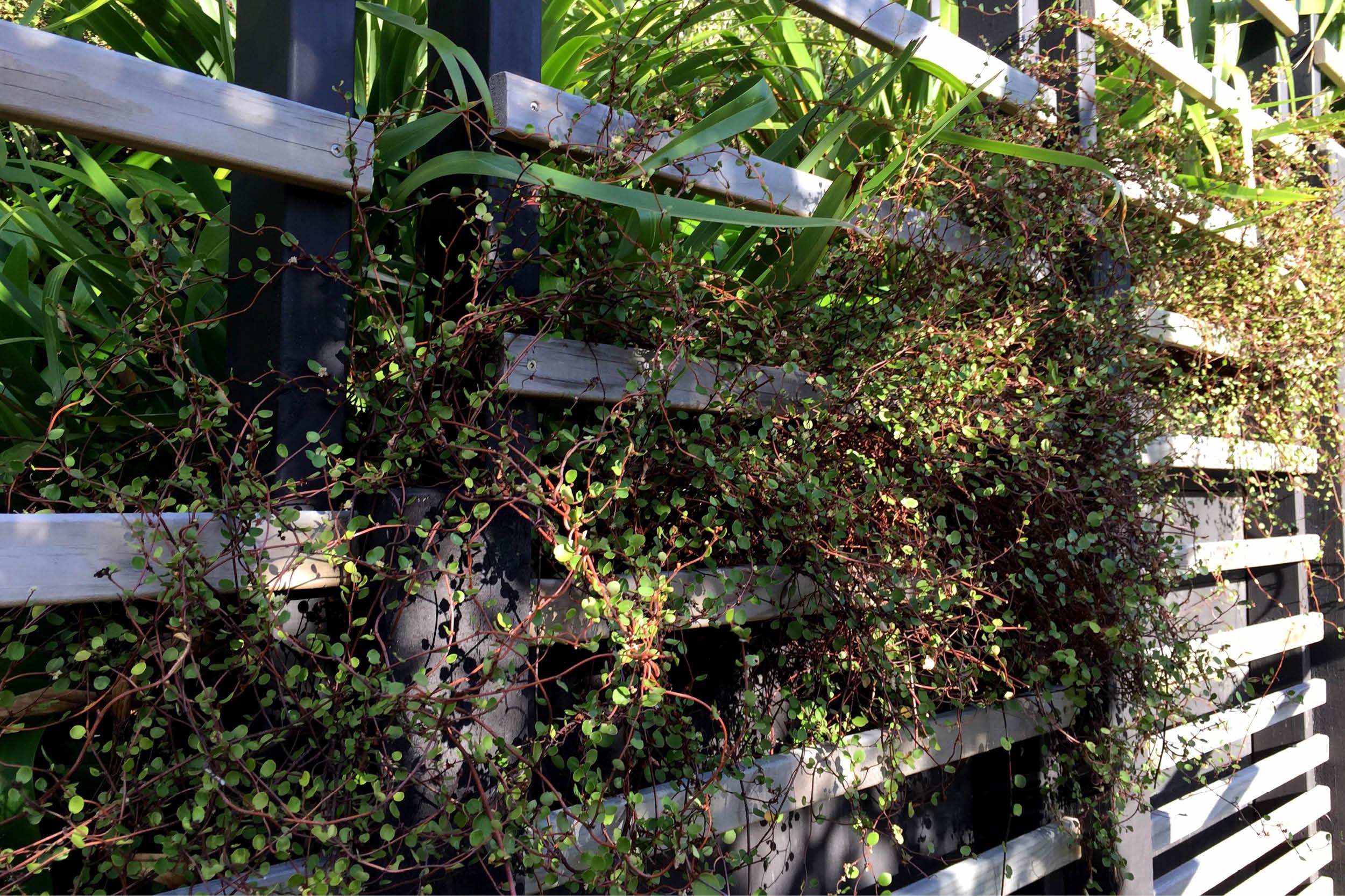 Garden_Steps_Wellington_2.jpg