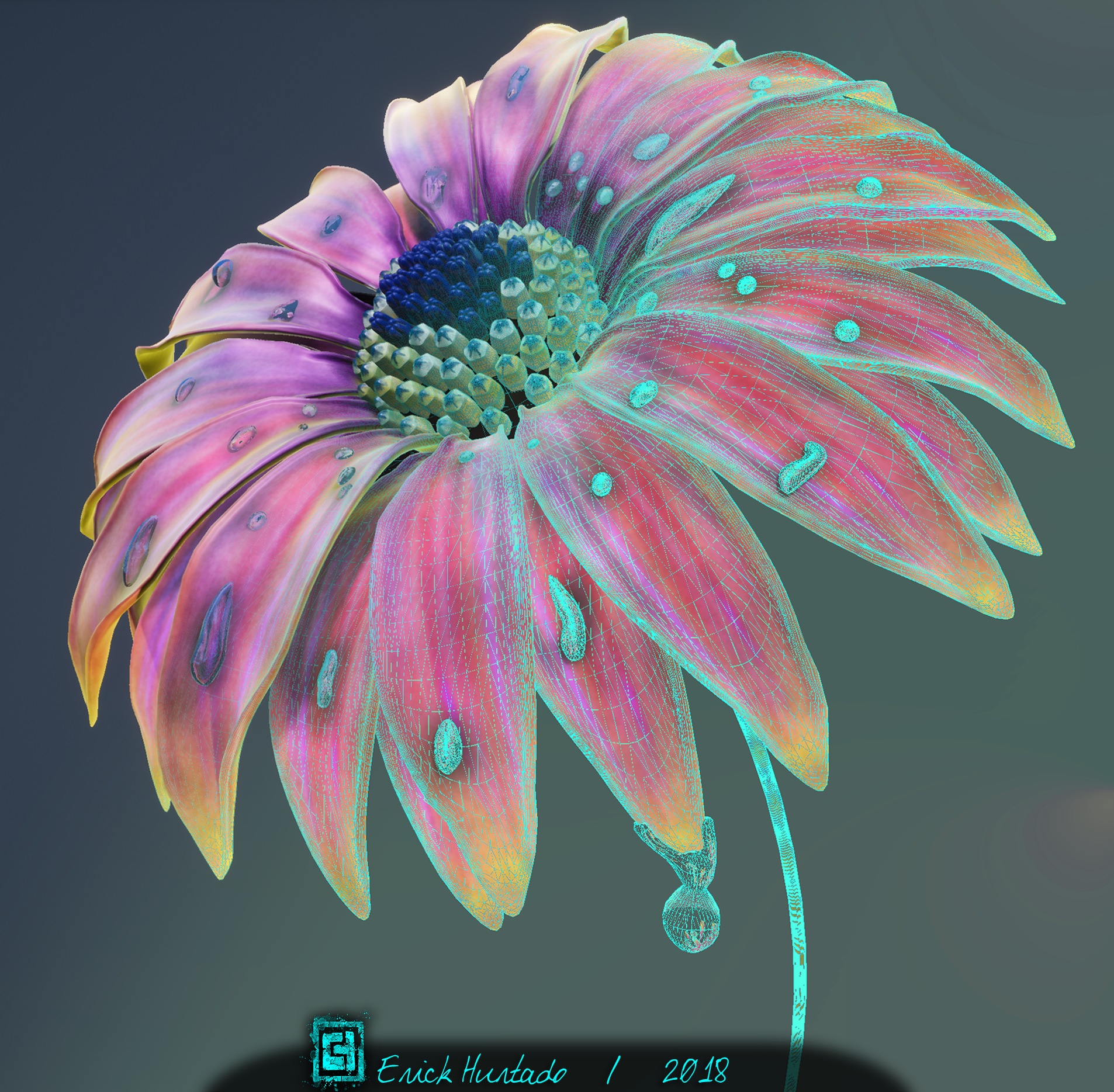 Flower_05_Wireframe_01_Color.png