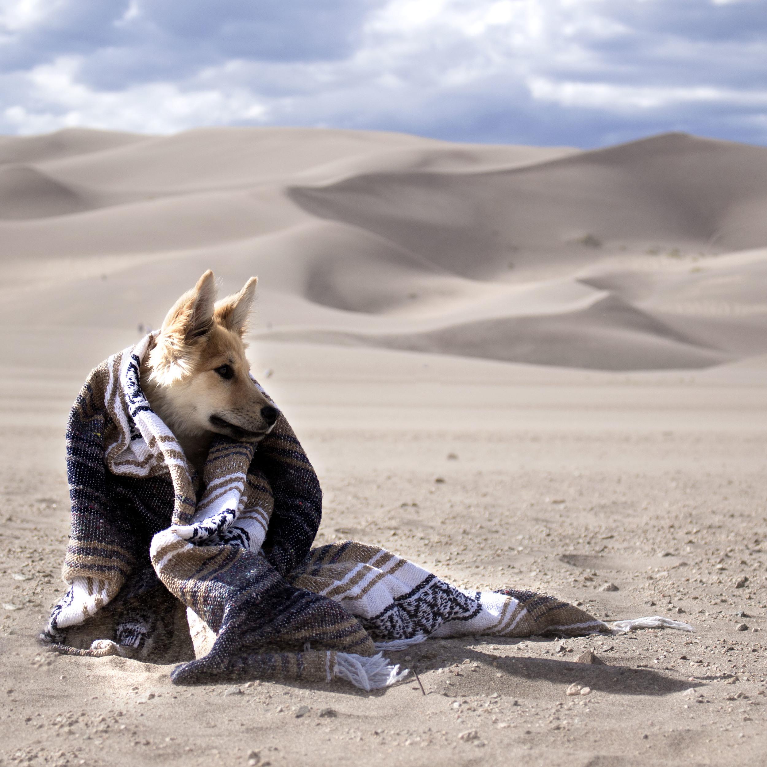 DesertDog.jpg