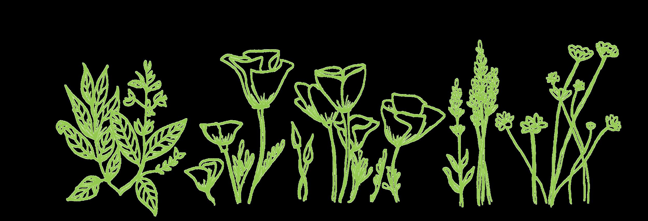 plants_green.png