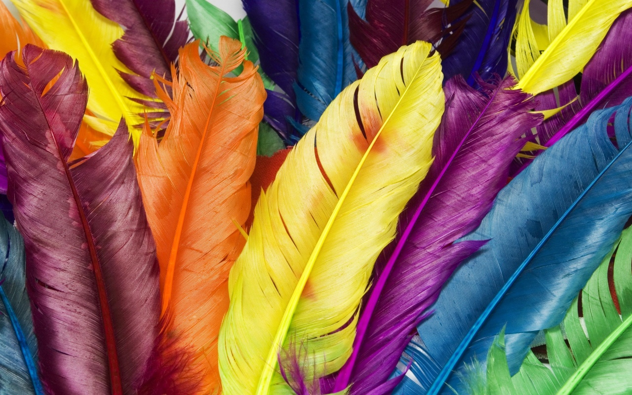 background feathers.jpg