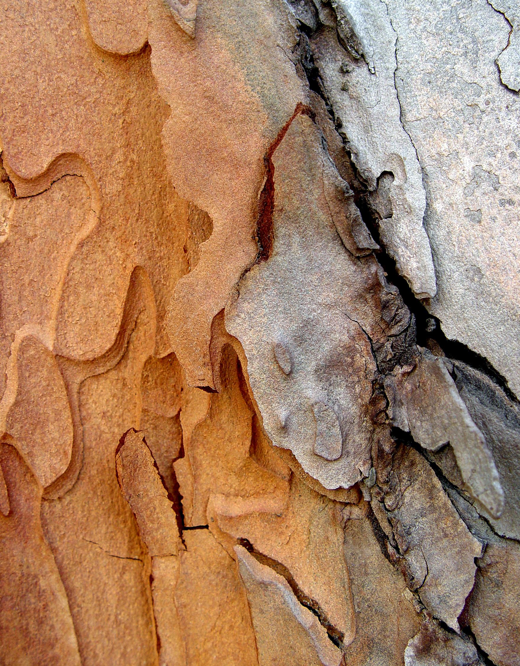 Bark Series VI