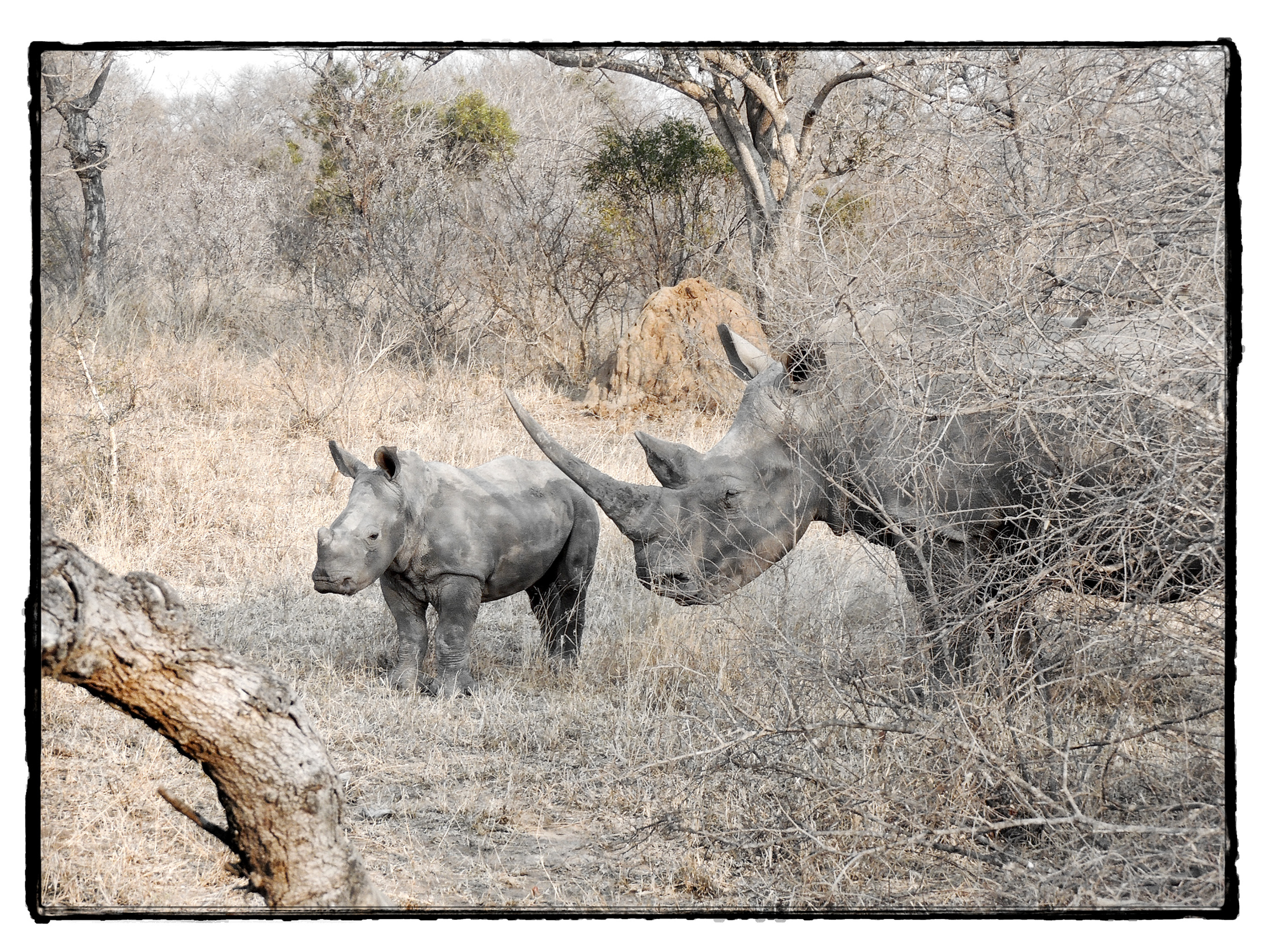 Thornybush #2