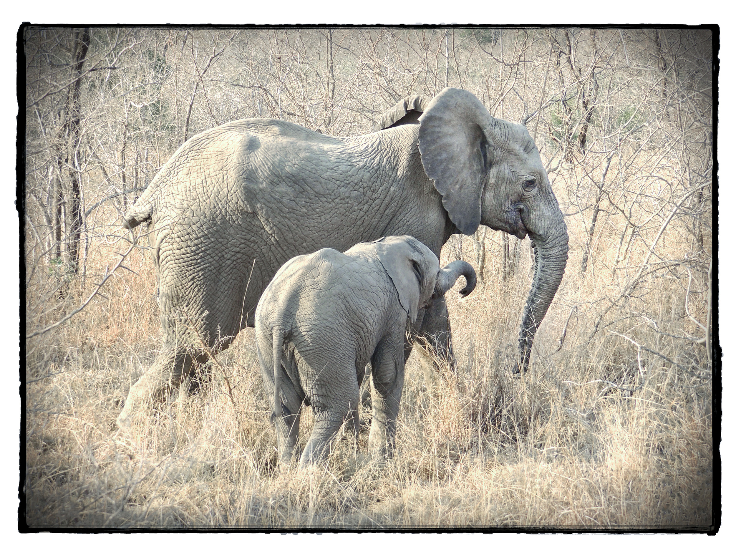 Thornybush #3