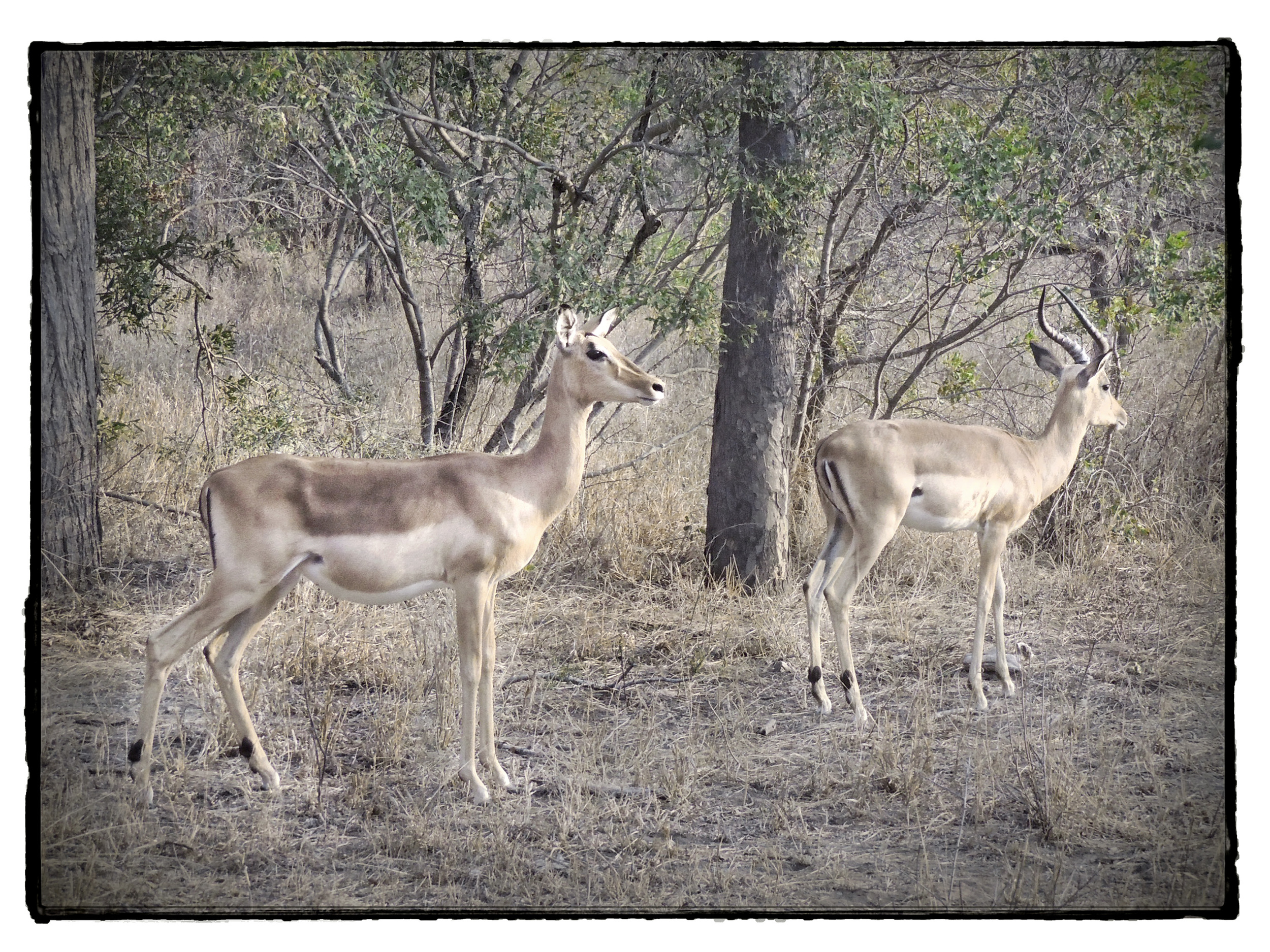 Thornybush #8