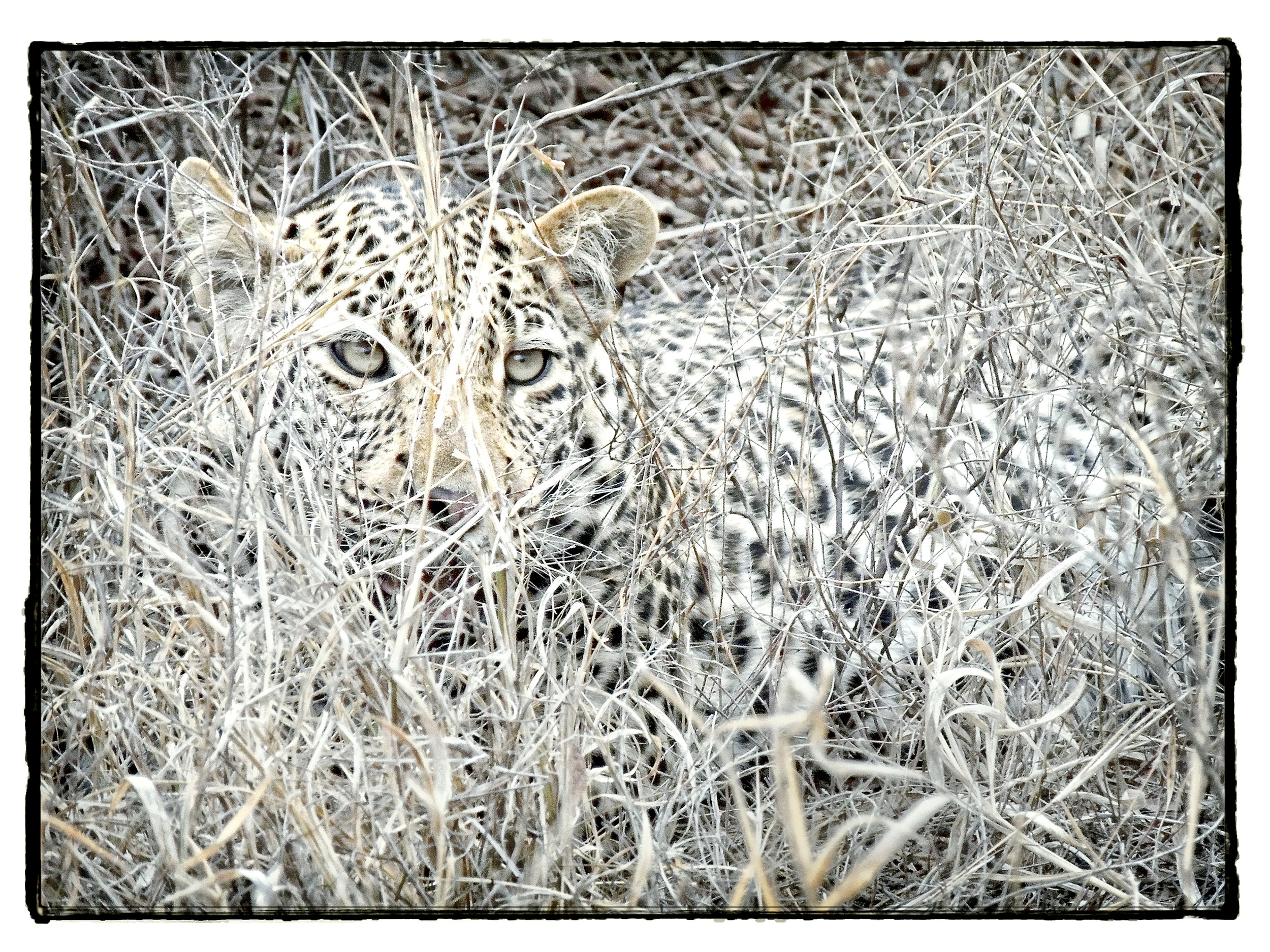 Thornybush Series