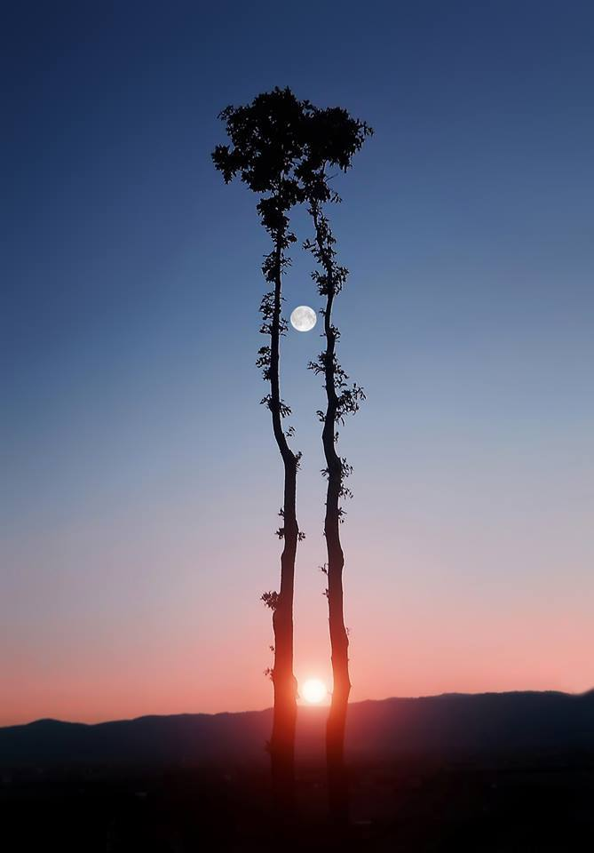 Sun and Moon through the Trees.jpg