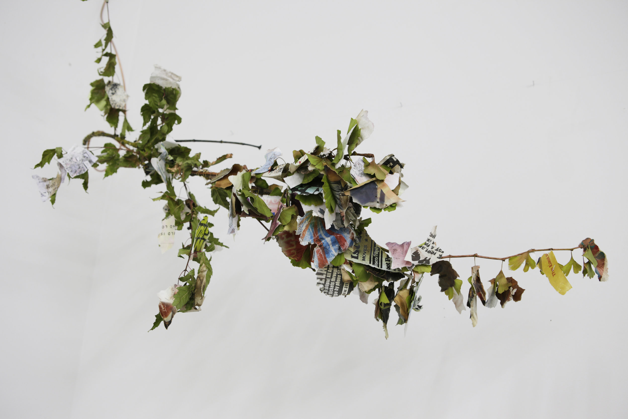 Shredded Poster Tree by Hanae Utamura.jpg