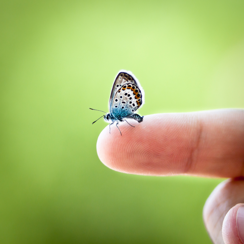 Somatic EMDR: tiny butterfly.jpg