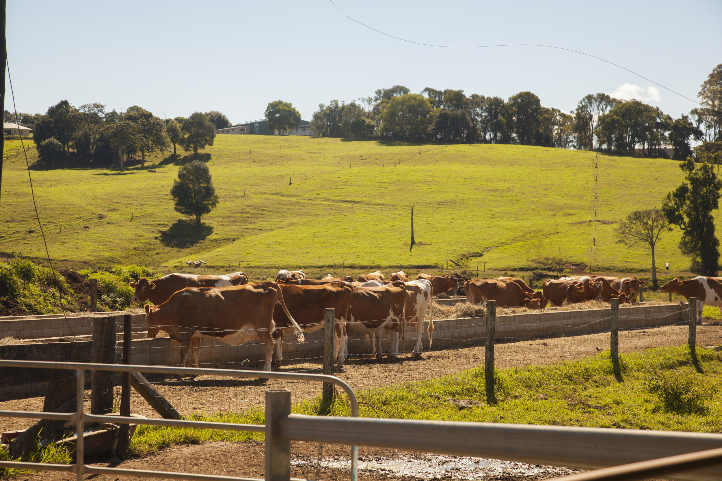 Maleny Dairy 18 May 2016_38.jpg
