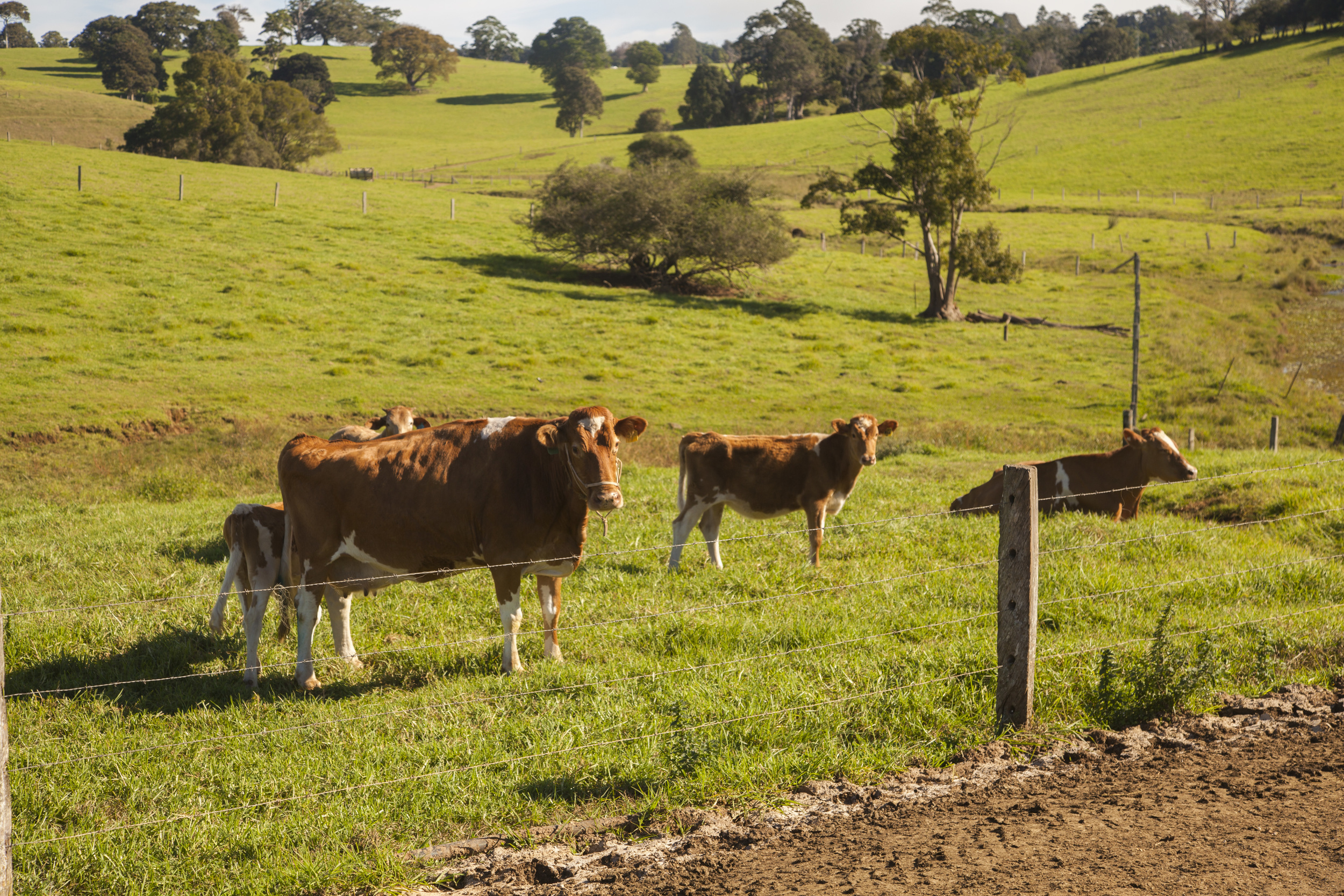 Maleny Dairy 18 May 2016_113.jpg