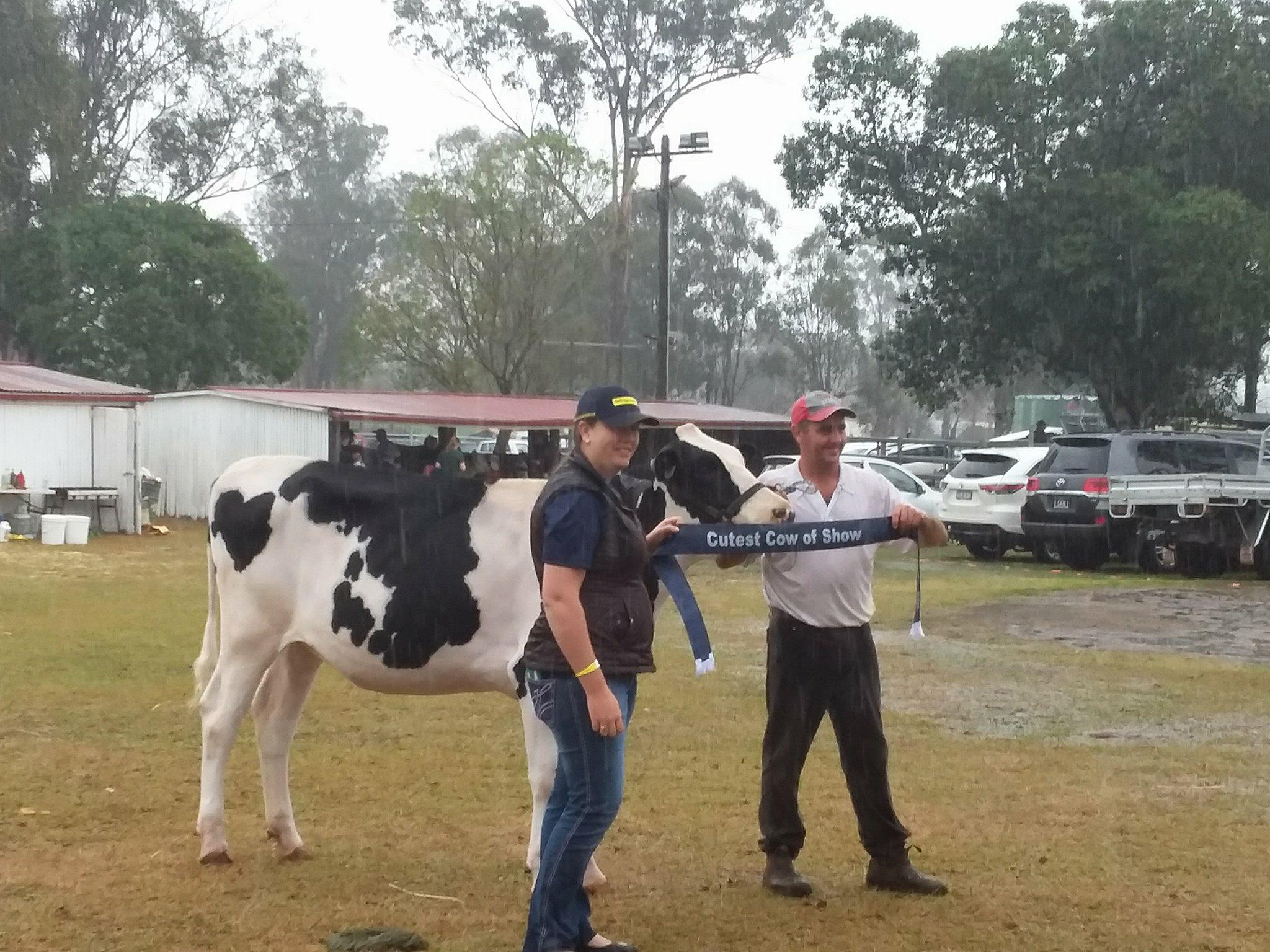 Congratulations to Glencrest Windbrook Supermodel and Rodney Teese for winning Cutest Cow in Show.