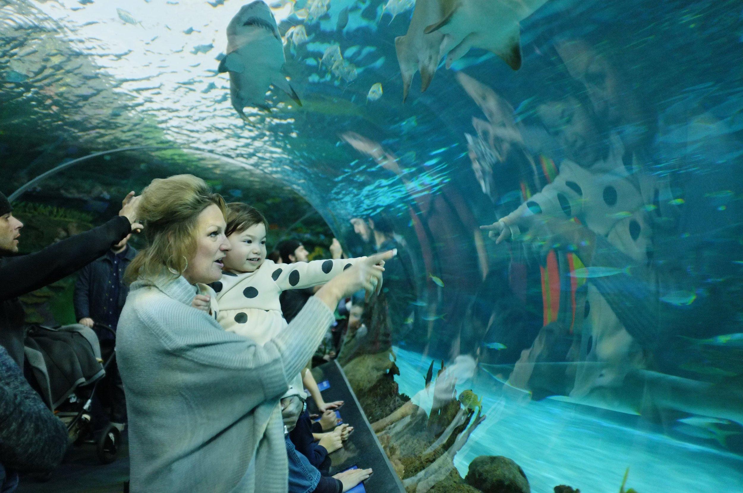 A Family Outing // The Aquarium