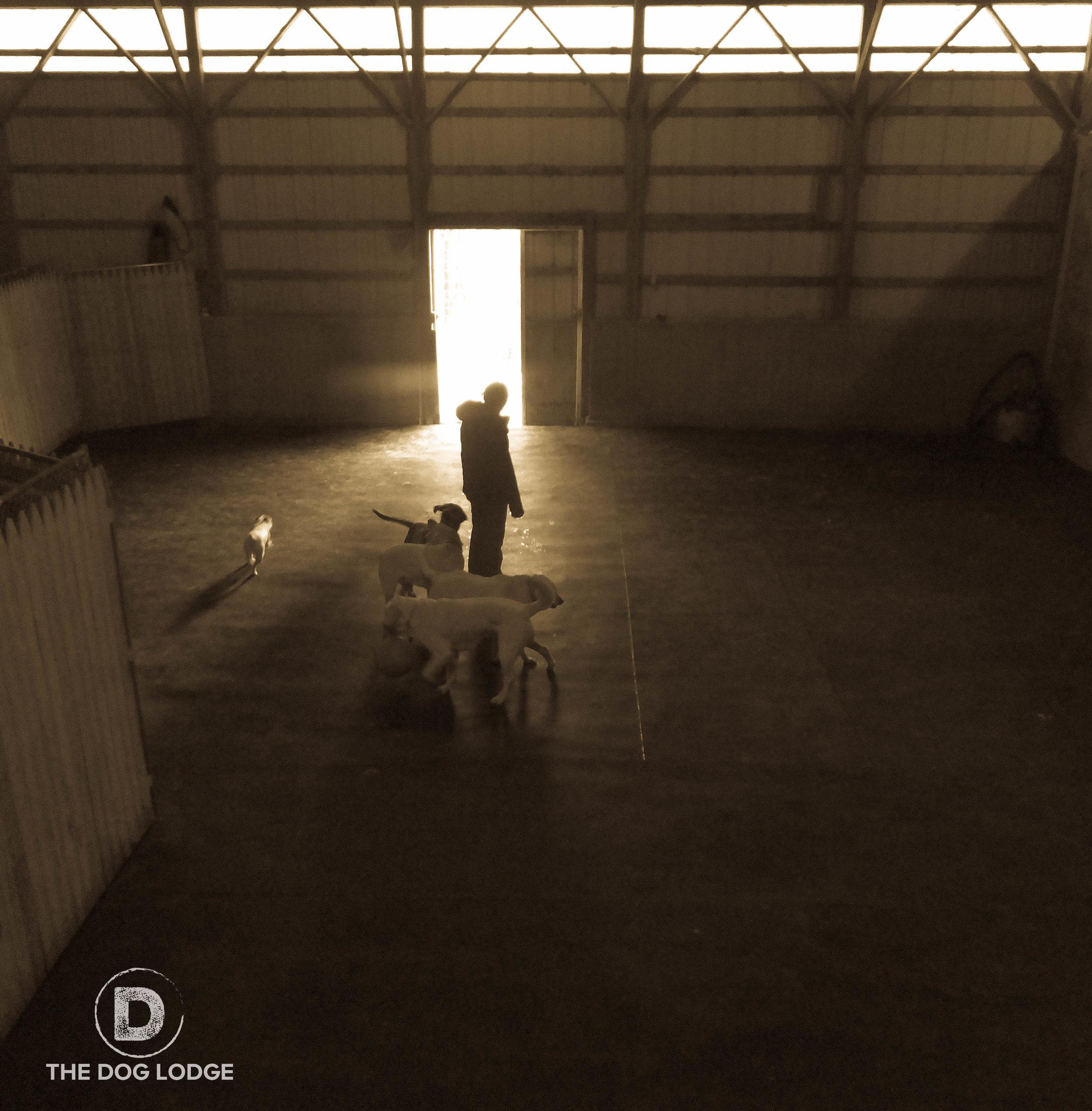 The Dog Lodge Indoor