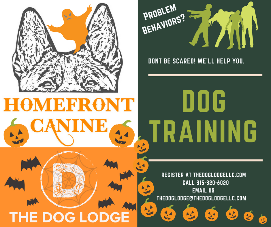 dog-lodge-homefront-canine-syracuse-camillus.png