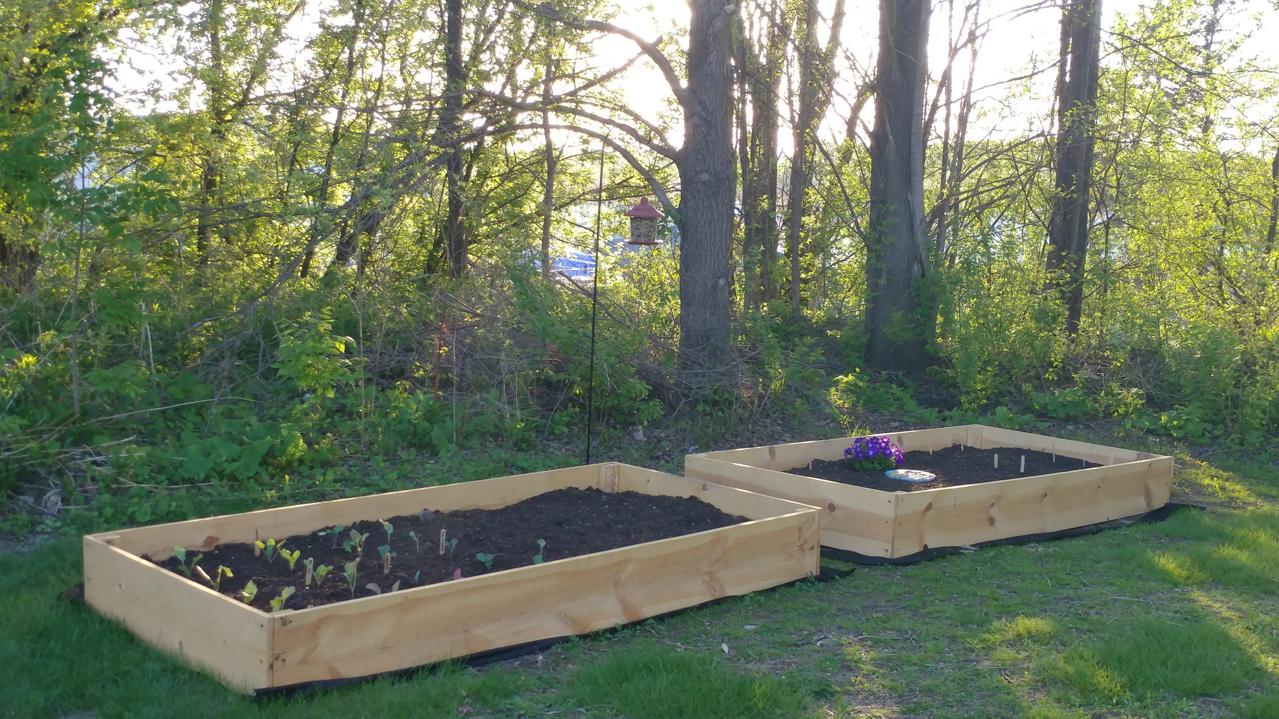 The Red Wing Recovery Garden is a way for clients to engage in community-based therapeutic activities that strengthen recovery, resiliency and social connectedness.