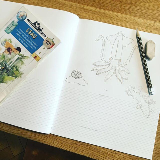 Pour notre travail sur l'eau Liv dessine la vie d'un habitat côtier dans son cahier H.2 #naturestudy #geography #homeschooling
