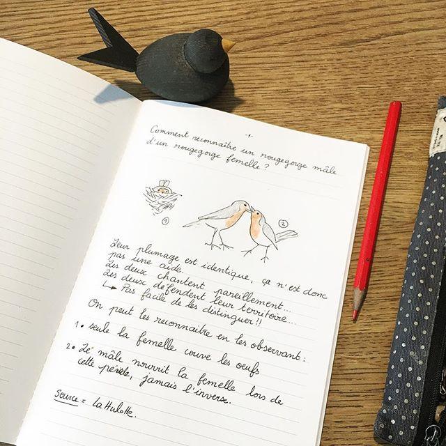 Première question dans mon Cahier Curieux ! Sur les oiseaux évidement 😉🤔 #cahiersh #cahiercurieux