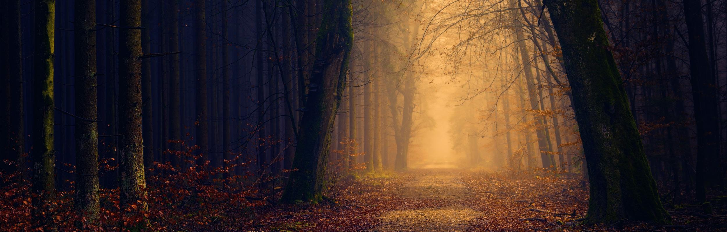 four-seasons-image.jpg