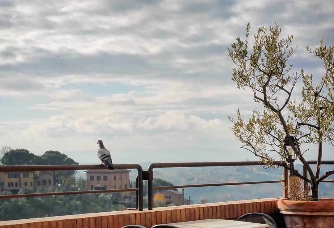angelapark-pensivetuscanpidgeon