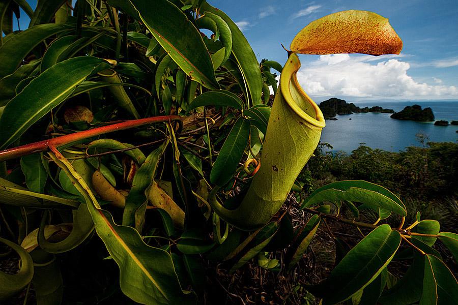 Oceans_WestPapua_100928_03402.jpg