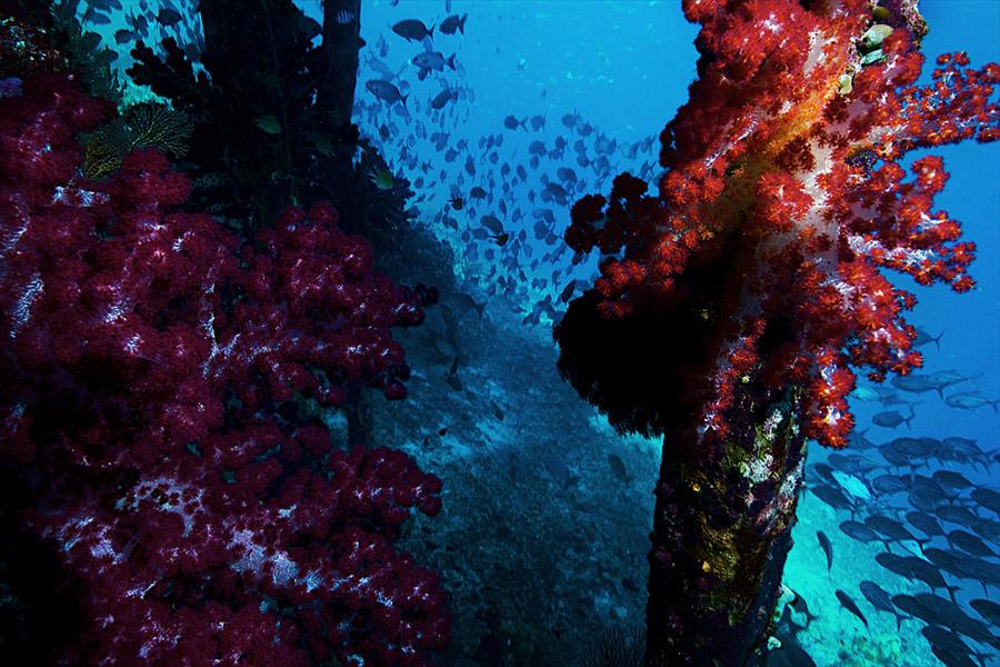 Oceans_WestPapua_101003_06827.jpg
