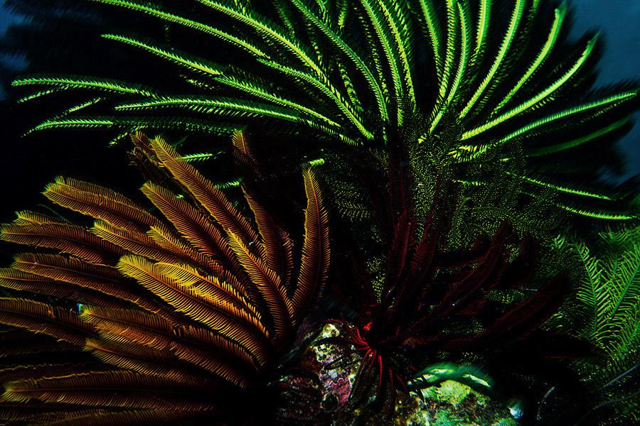 Oceans_WestPapua_101003_07137.jpg