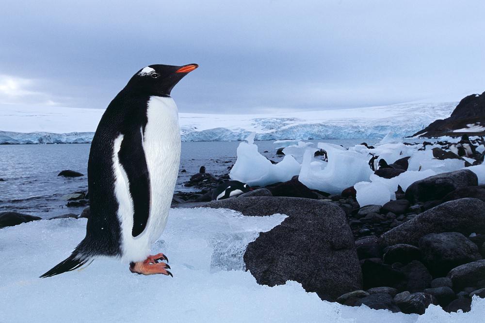 Antarktis forts 27_1000px.jpg