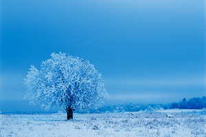 MK_Winter_01.jpg