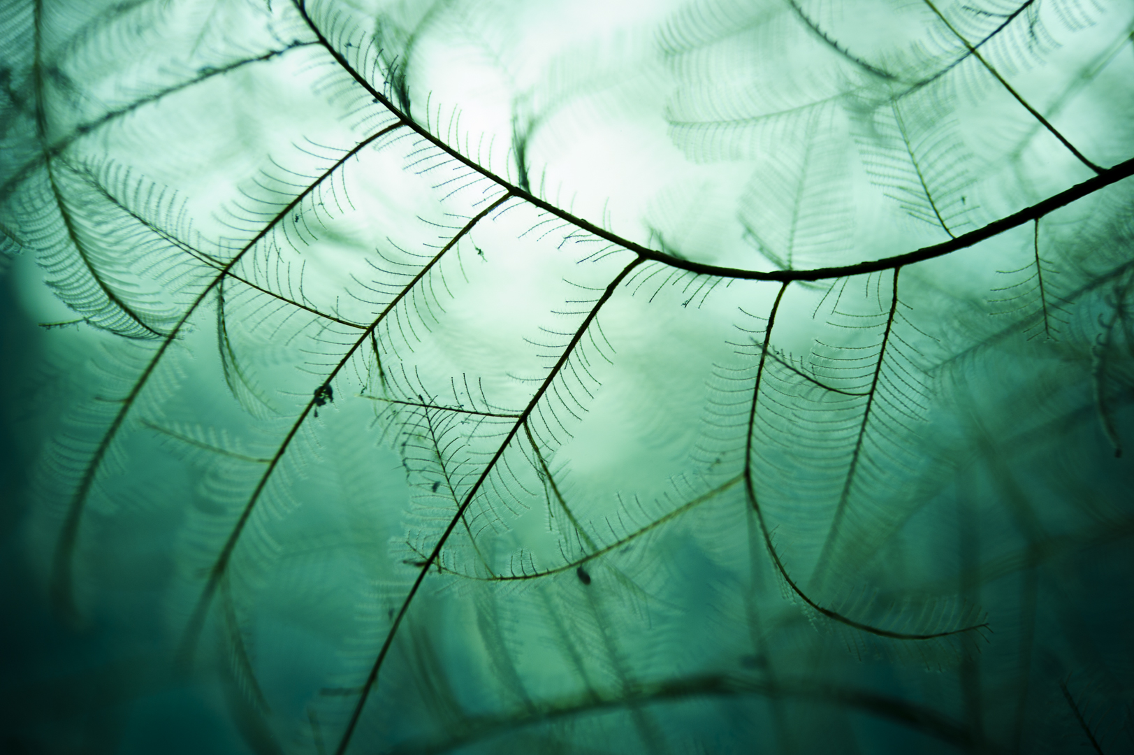 Some animals are so delicate that they almost exhibit a featherlike structure. The branches of hydroids create a mesmerizing pattern, able to filter out bacterial plankton from the waters.