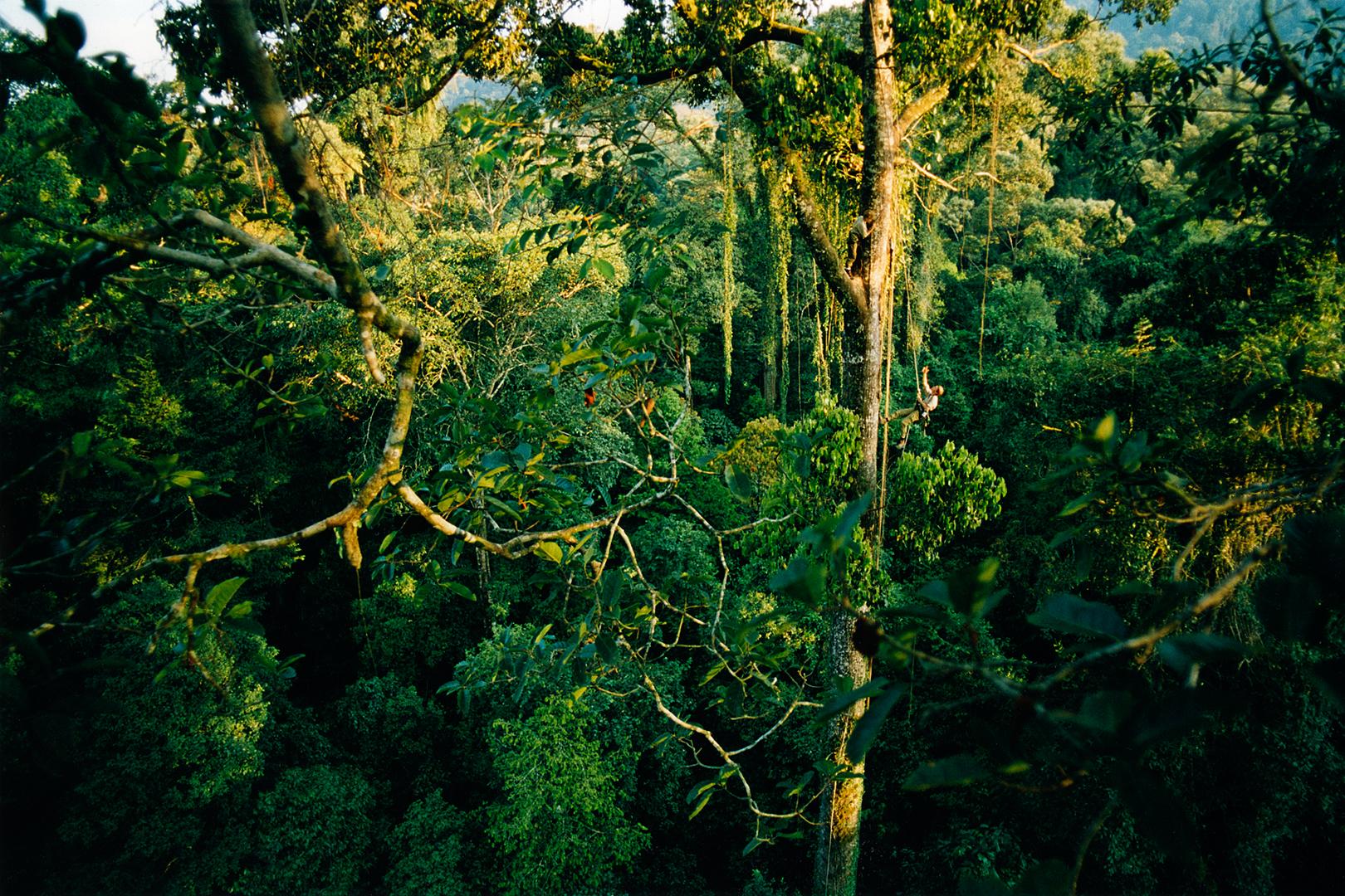 Trädklättring Borneo, Mattias & Monika 02.jpg