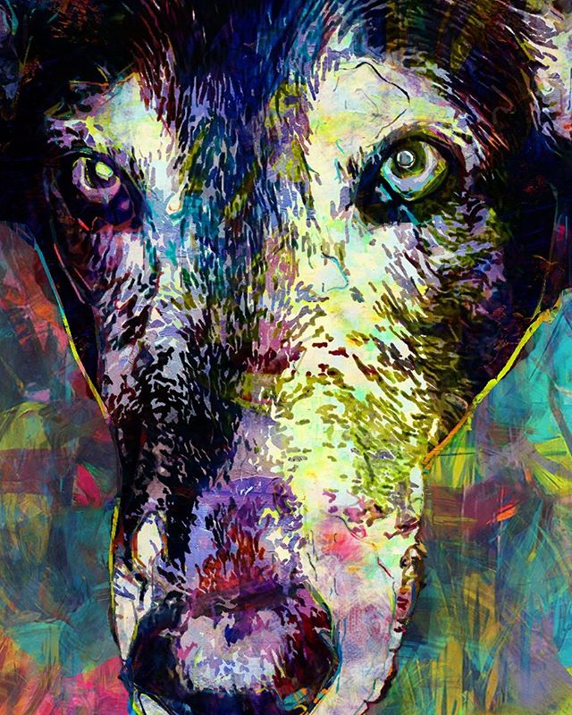 "Here's why I love creating these. ""Meet Shelby. Shelby (Etta was her name then) was featured on  an episode of ""The Dog Whisperer"" back in 2006.  She chose my husband, which made their bond extremely special.  She was a beautiful free spirit and slowly came out of her shell with our family.  Shelby also had a soft spot for kids.  She enjoyed playing fetch and running around with our daughter, nieces and nephews.  When my husband lost Shelby he was heartbroken.  Thank you for the wonderful job on the picture, my husband cried when he saw it."" Thank YOU, Katrina for allowing me to create something to honor the memory of your beloved pet."