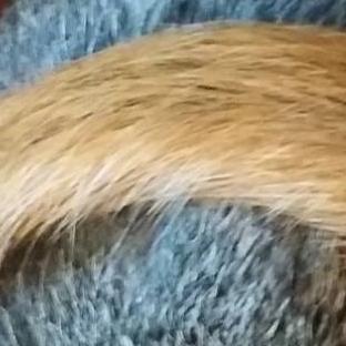 squirrel tail.jpg