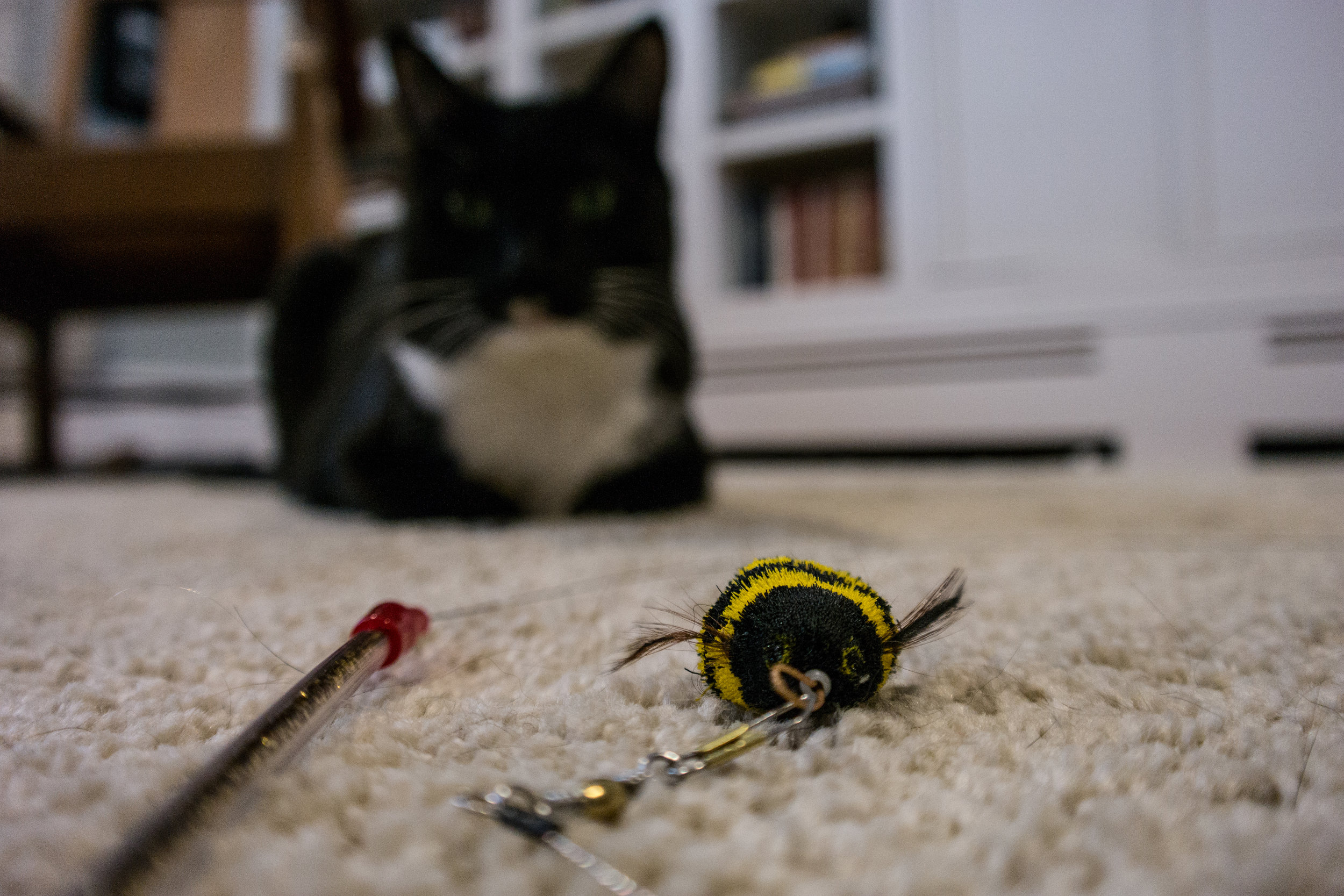 """Da Bee"" Cat Catcher Toy"