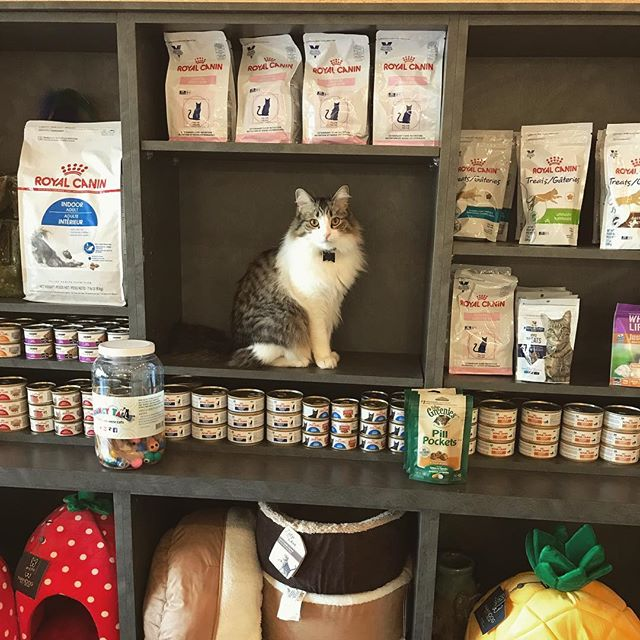 Wait. What do you mean nobody is doing the mannequin challenge anymore?  #catclinicvetpierre #catclinicvet #keepcalmandlovecats
