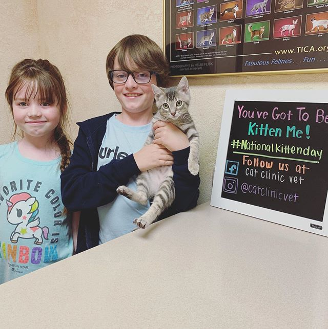 The Duffin family is celebrating national kitten day by making sure their new kitten Neville is healthy as can be!  #nationalkittenday #catclinicvet