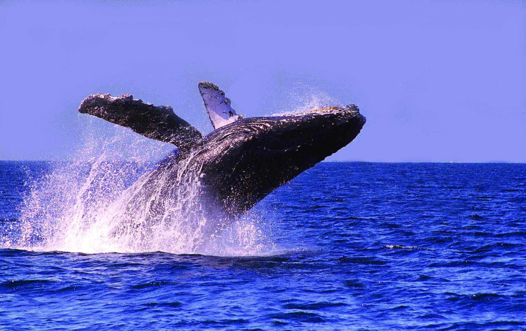 Whale - punta mita.jpg