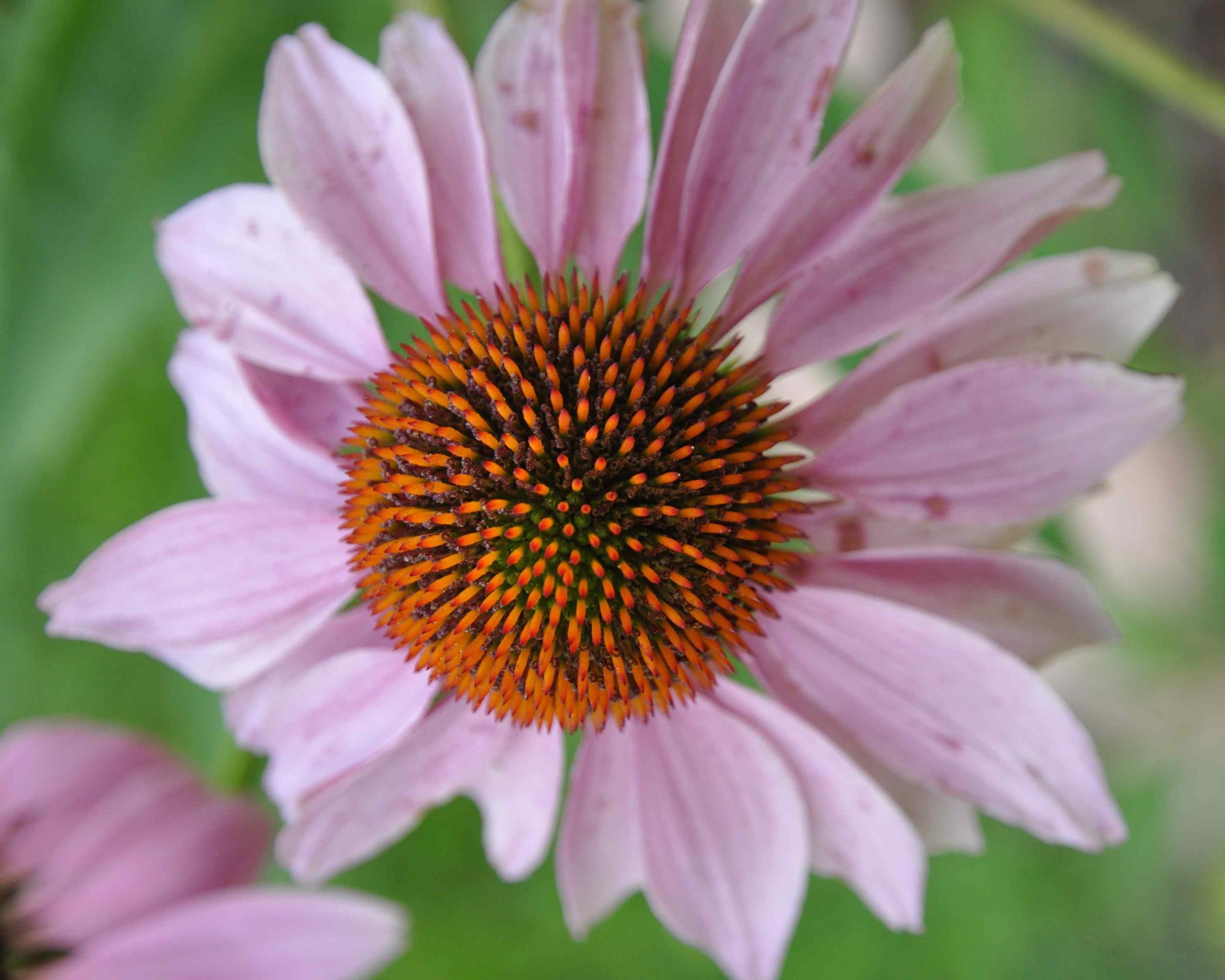 S Flower Closeup.jpg