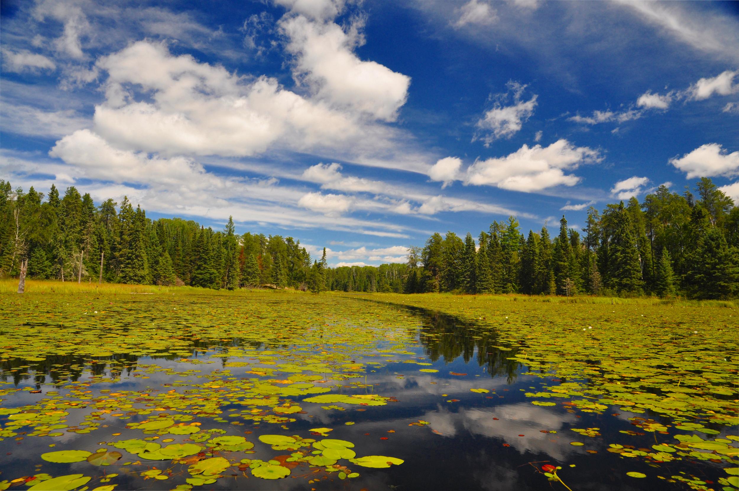 BWCA lake.jpg