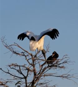 crane - bogle.jpg