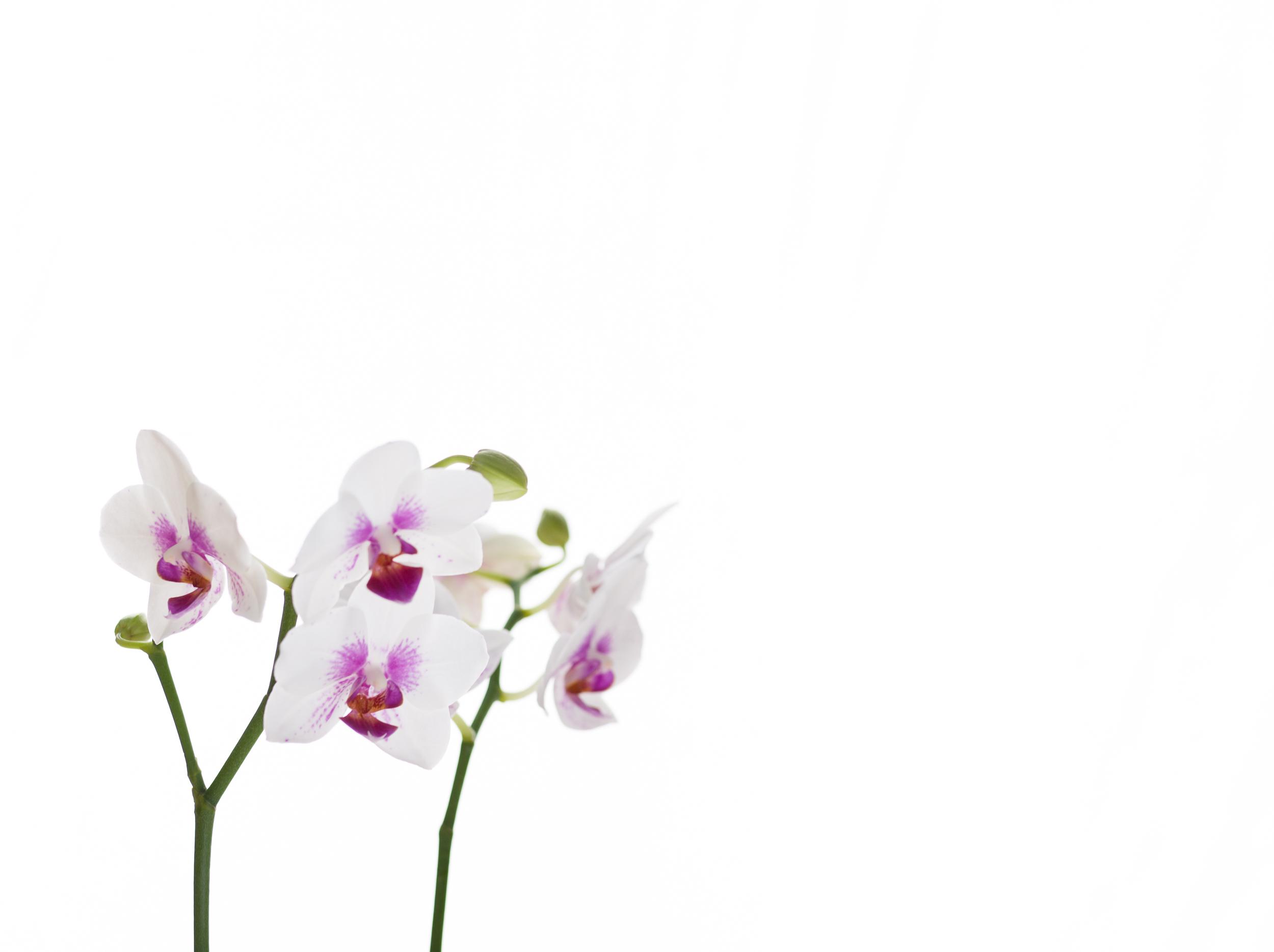Fine-Art-Print-Kaz-Photo-Works-62.jpg