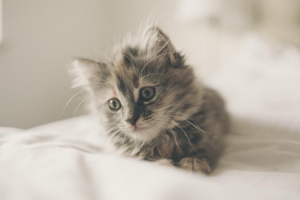 Kitten break! Take breathers whenever dealing with the heavy stuff.