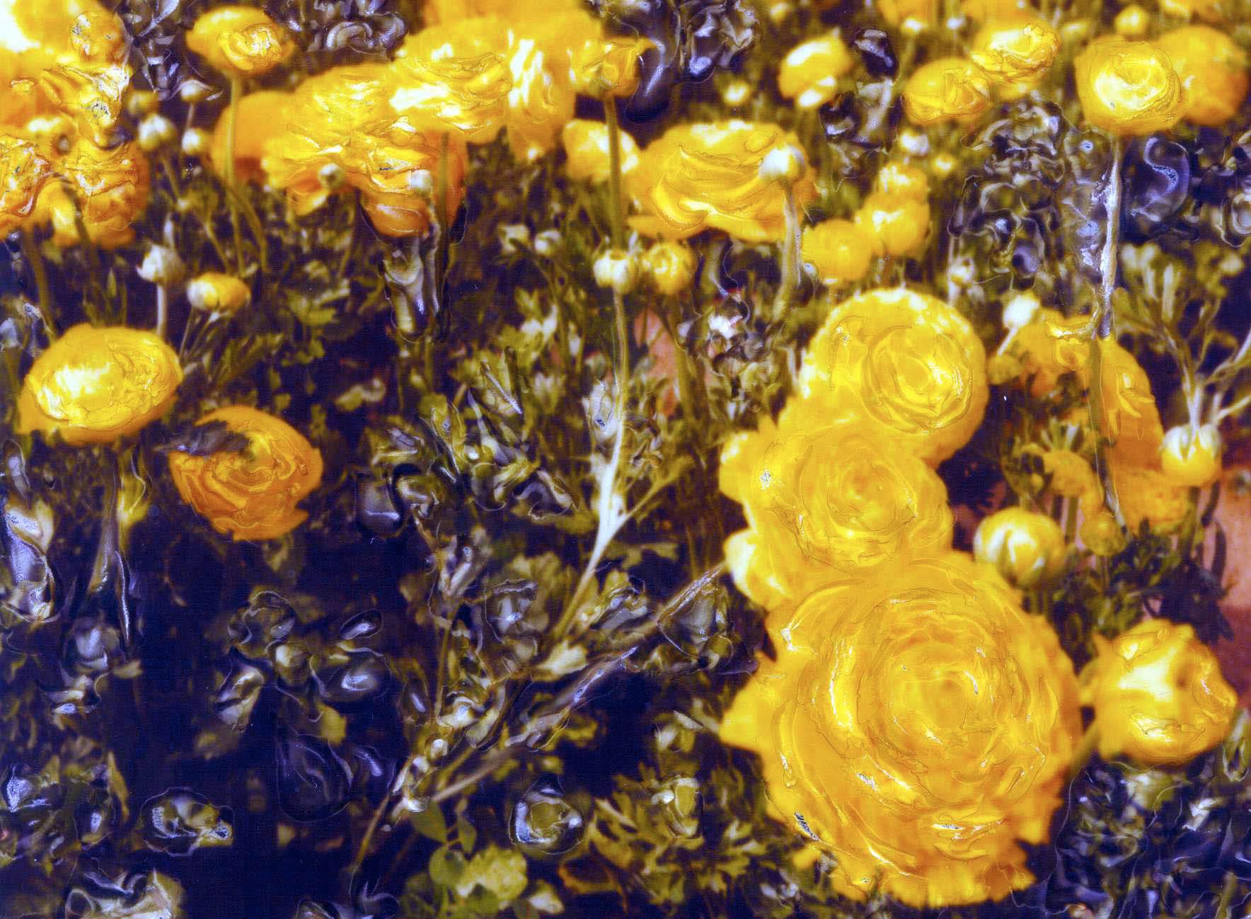 YELLOW FLOWER FIELD 1.jpg