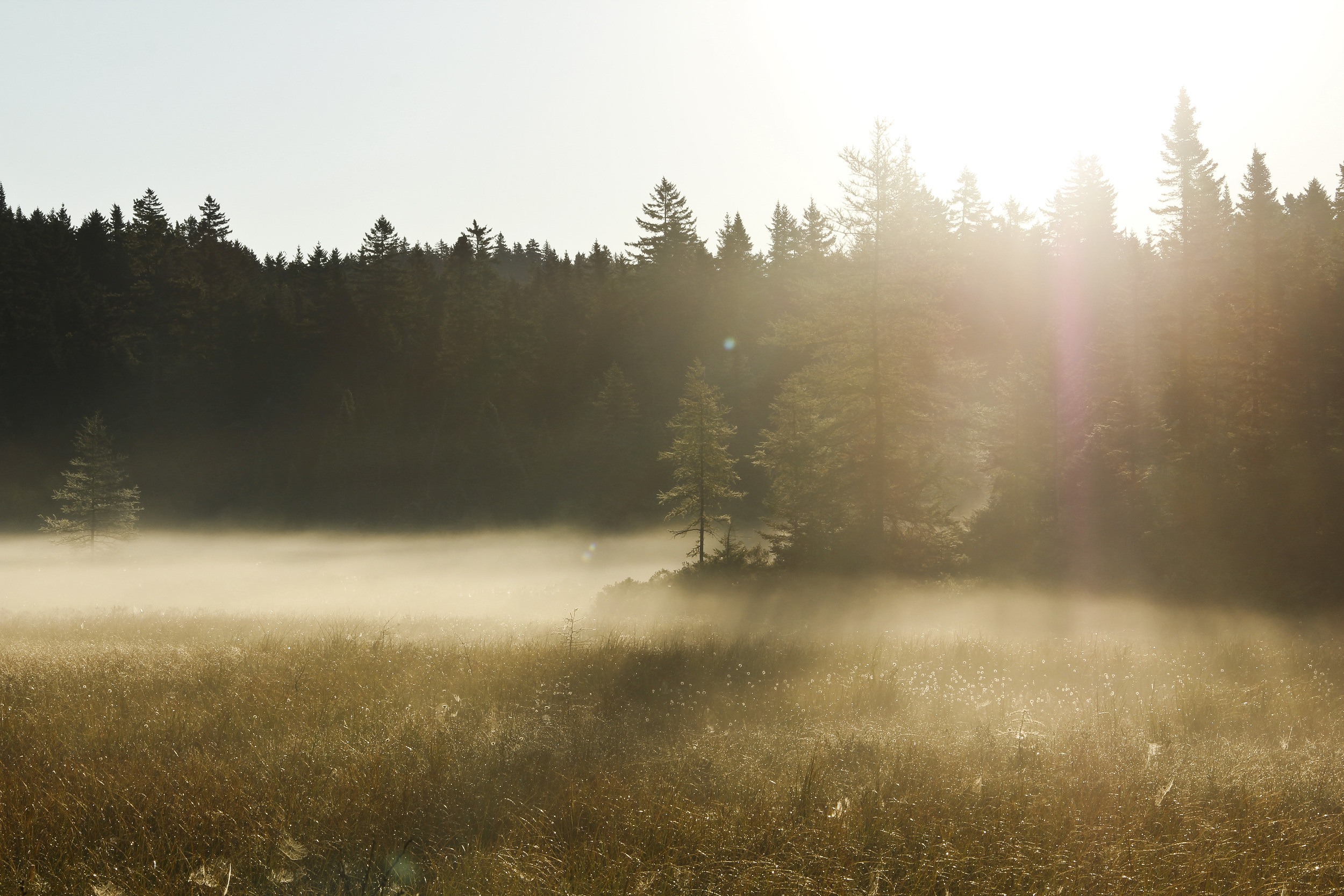 This open field filled with fog made for a surreal and tranquil morning.