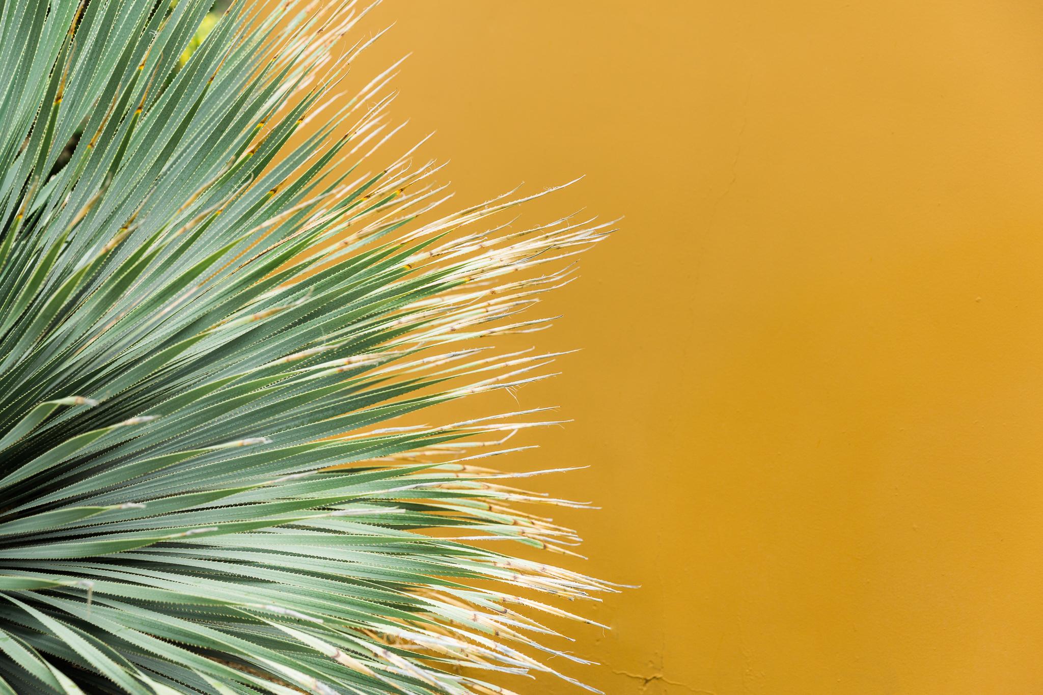 Arizona_yellow wall and plant.jpg