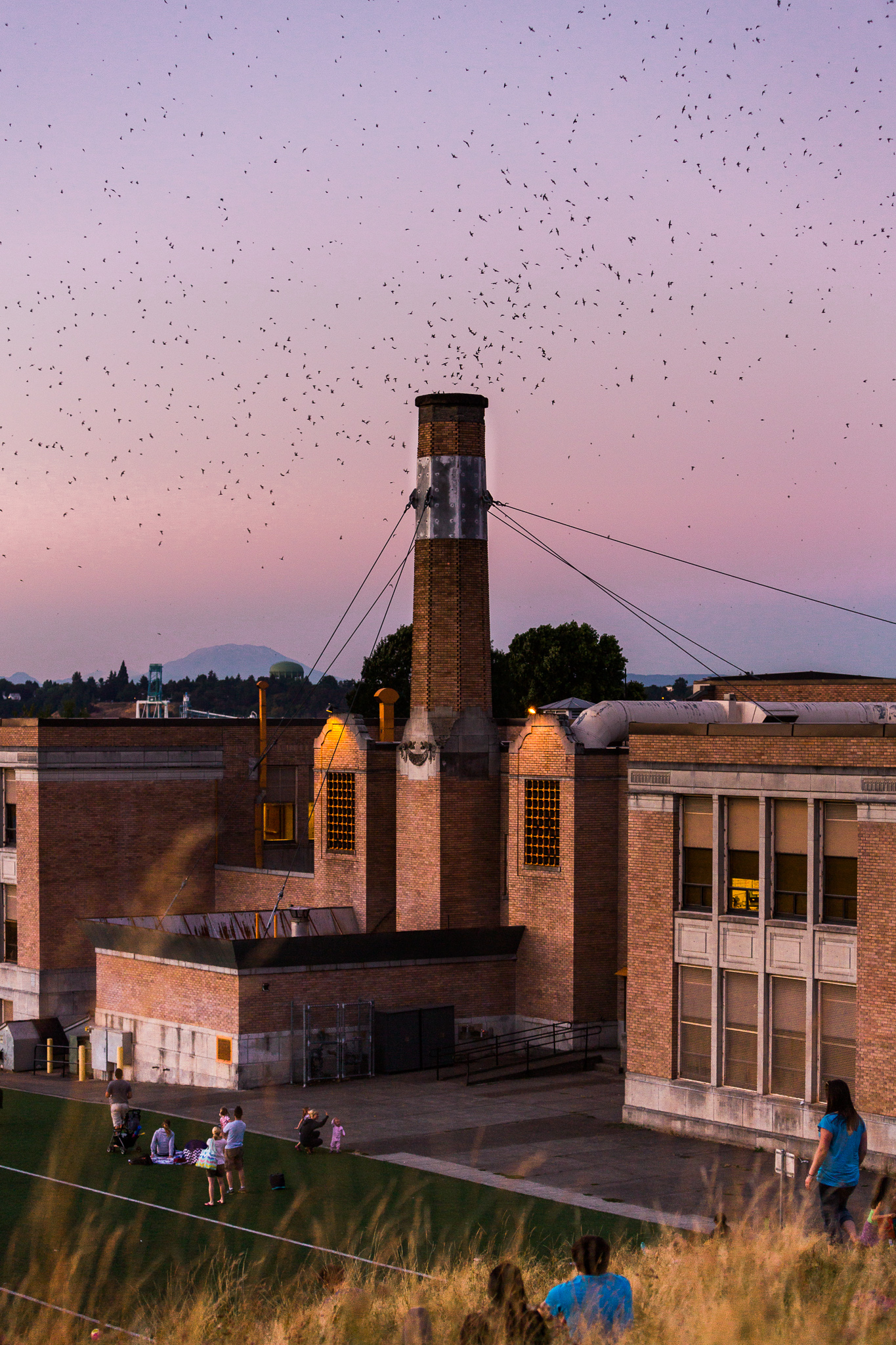Swifts Flying 01_web res.jpg