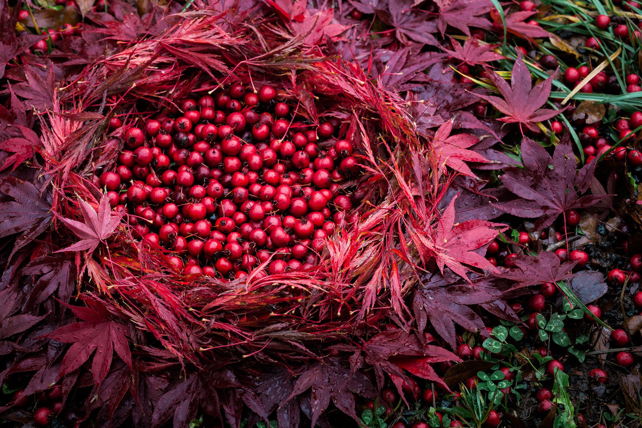 Red Berries-Red Maple 07_KLiK Concepts web.jpg