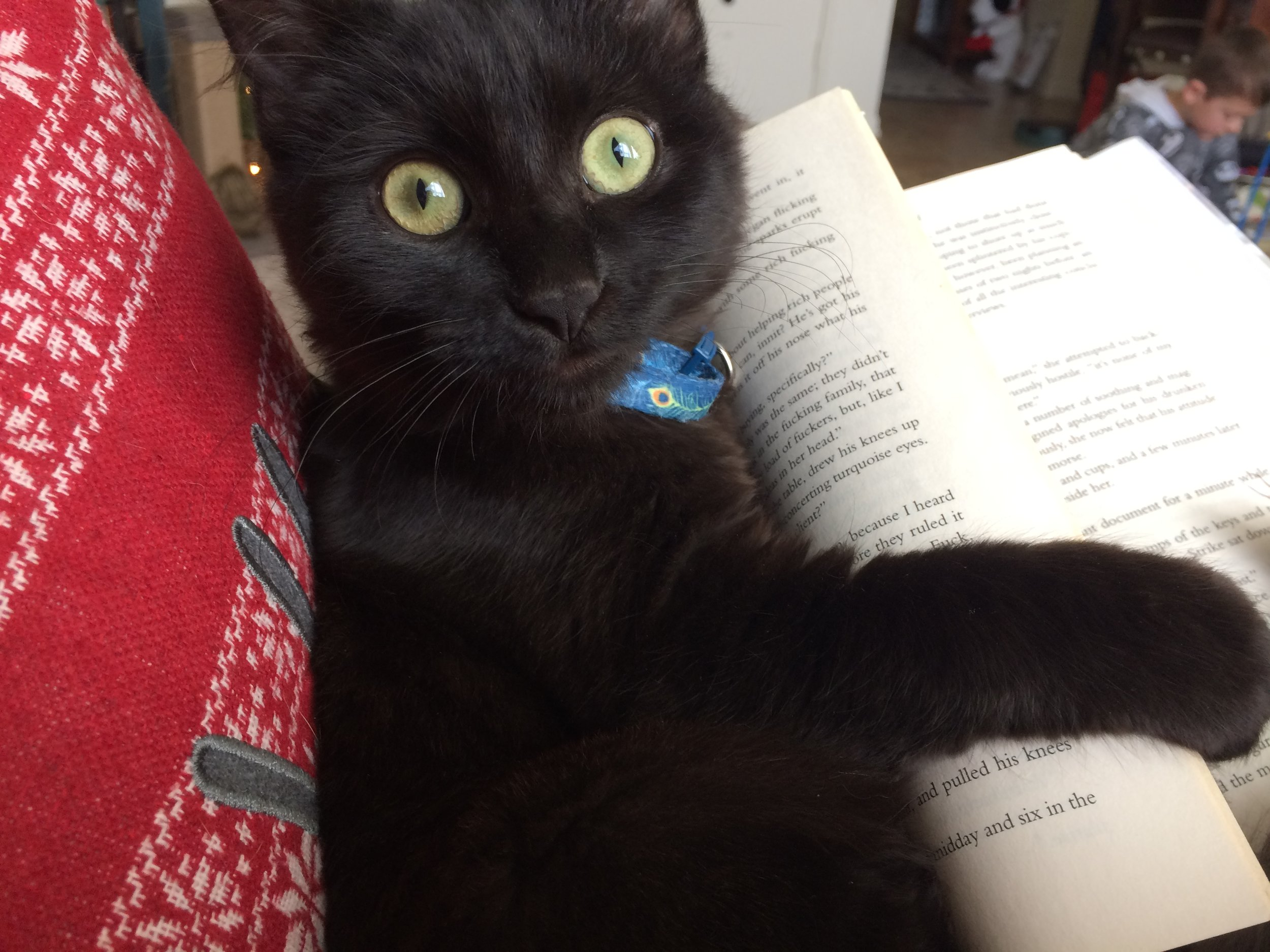 My current favorite picture of the other terror in the house, Loki. He was helping me read, not very effectively, I might add.