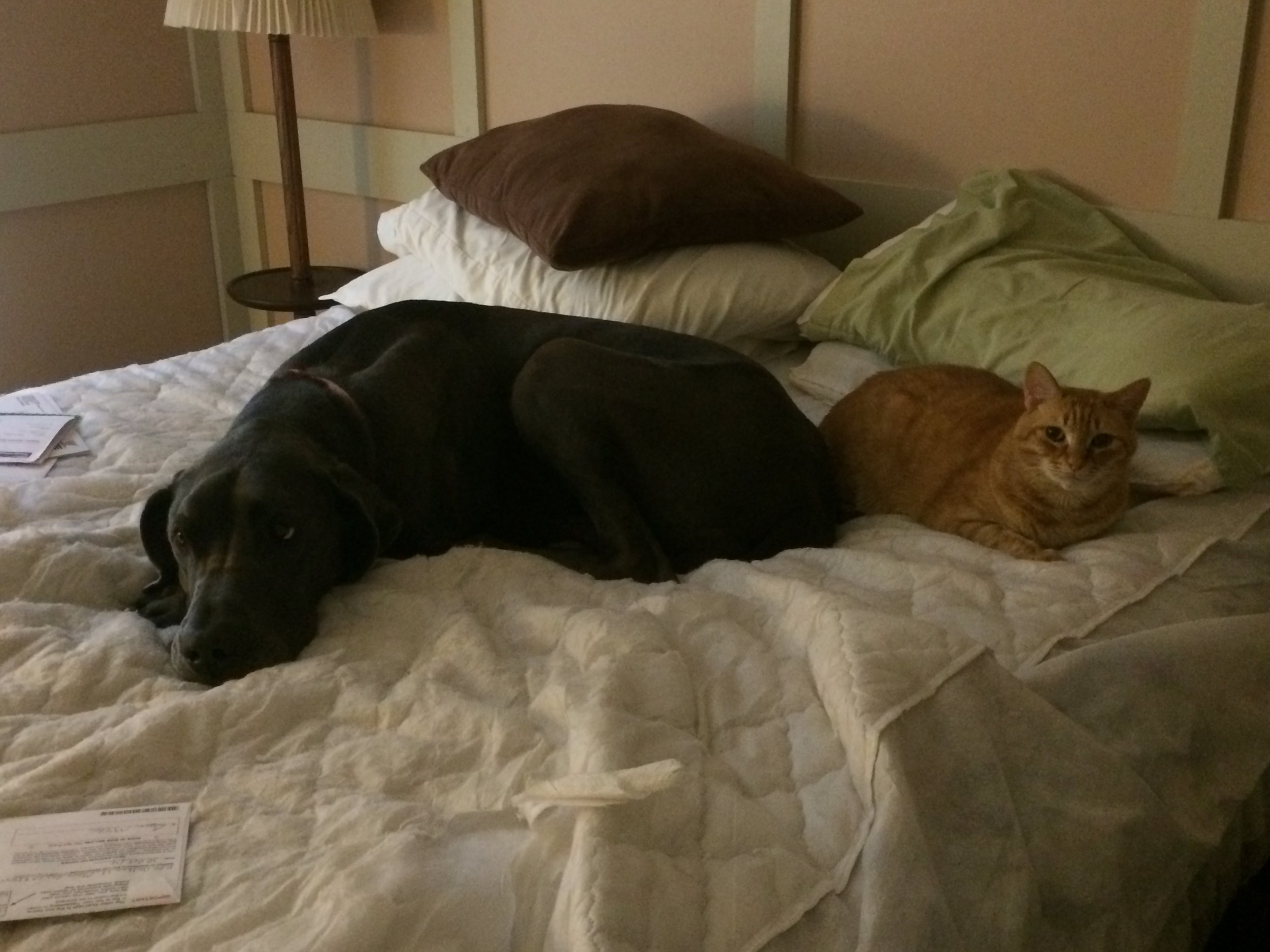 Buddies, in the no-pack room, while the movers packed our house in Virginia, with the bed stripped down to nothing, freaking the hell out, but providing solace to one another.