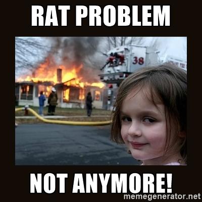 rat+meme.jpg